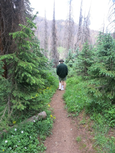 John, ahead on the trail, near the dead conifers (killed by pine bark beetles and drought) - Continental Divide Trail, near Wolf Creek Pass