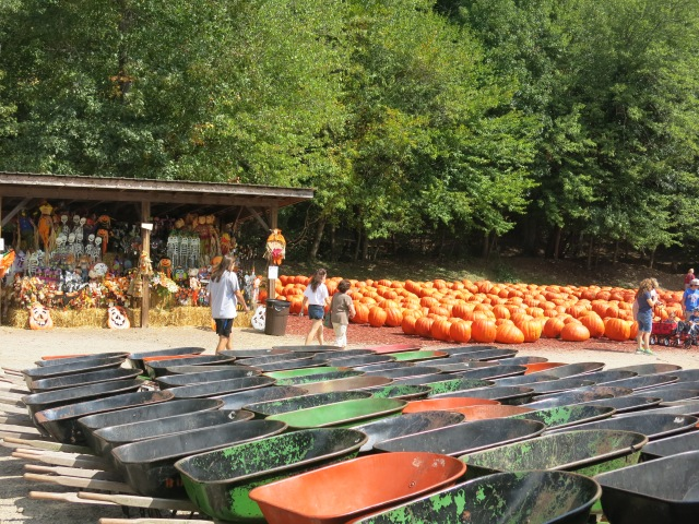 Halloween decor and very large pumpkins for sale - and wheelbarrows to tote them