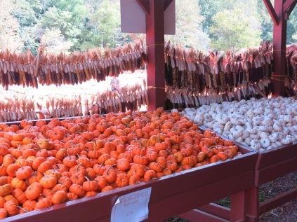 Mini Pumpkins in Orange and White, dried Indian Corn