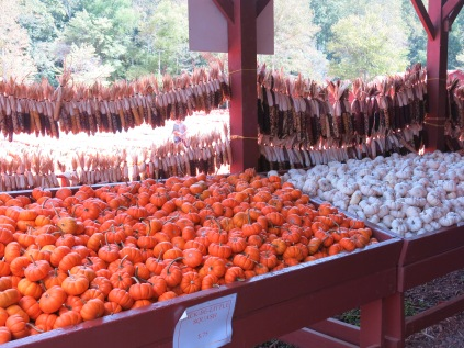 Mini Pumpkins in Orange and White, dried Indian Corn