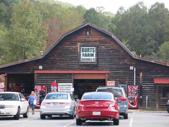 Burt's Pumpkin Farm - Dawsonville, Ga
