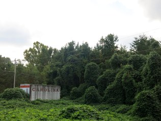 a little north Georgia kudzu... I have heard it said it can grow up to six inches an hour, and we have seen homes and more covered by the vine. Those covered shapes are trees...