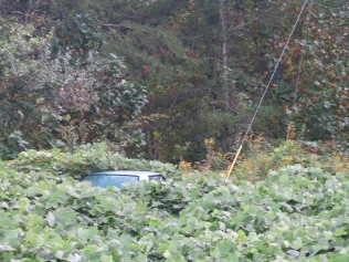 kudzu-covered car... and a hint of fall color in the leaves.