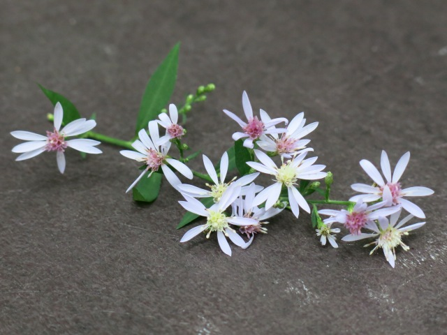 unidentified, found on table, Chrimneys  Picnic Area - Great smoky Mountains National Park