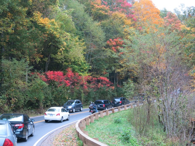 Newfound Gap Road - Bright red sumac, yellow, red, pink and gold from maples