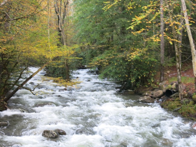 Little Pigeon River - off Greenbrier Road