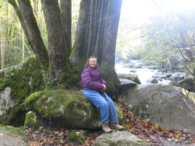 Greenbrier Road - Holly by a neat tree growing out of the boulders -  by Little Pigeon River