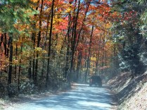 a really dusty road but the maples are at peak color - Red Maples, Yellow Maples, Sugar Maples