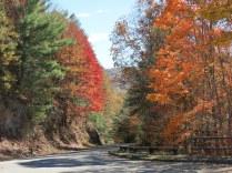 Maple Trees!