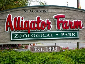 alligator_farm_sign_medium