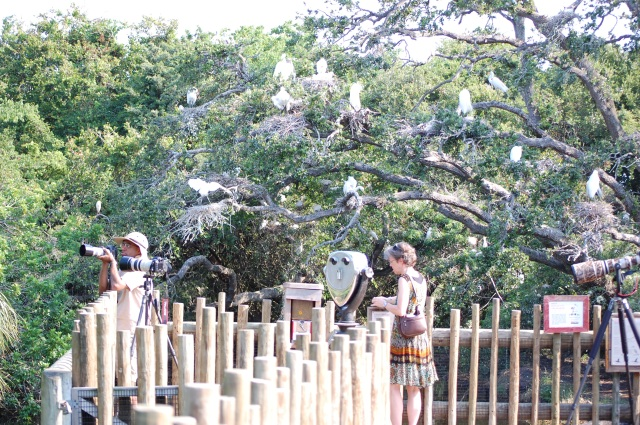 the Alligator Farm Rookery was full of photographers right after opening